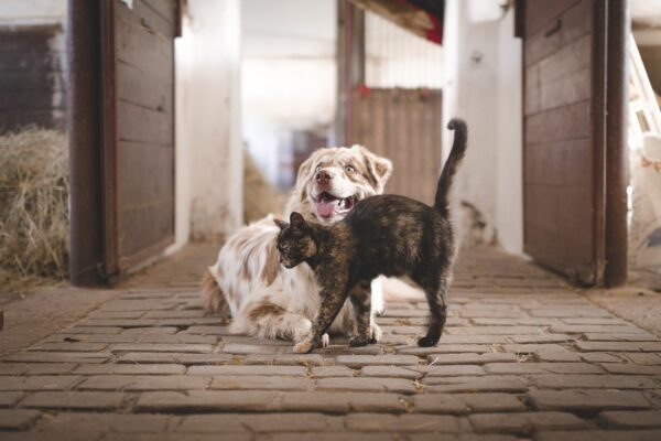 dog, cat, pets-5883275.jpg